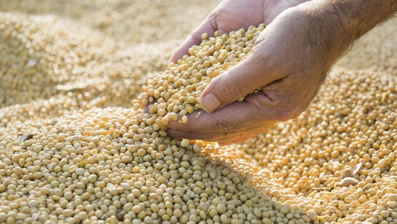 Estoques de soja dos EUA sobem 54% e os de milho são 15% maiores