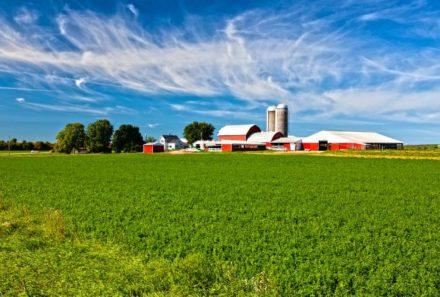 Chuvas afetam qualidade da safra de soja e milho nos EUA, diz USDA