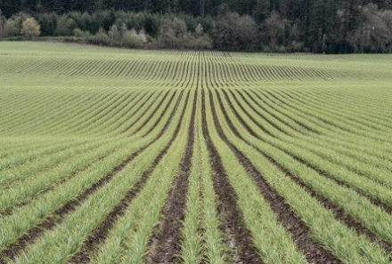 Agricultura de Precisão: A tecnologia no auxílio à produtividade
