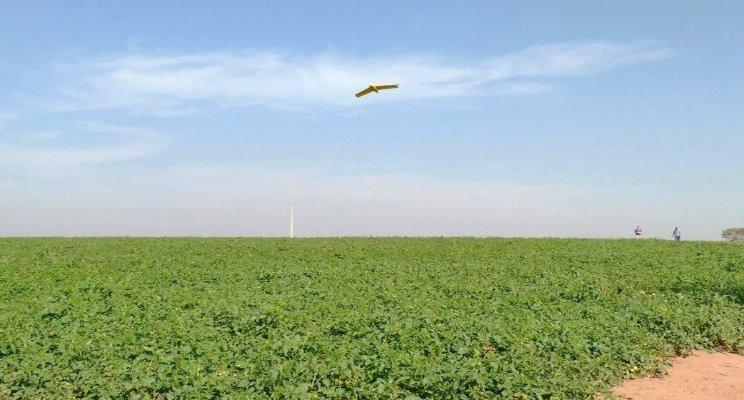 O controle biológico na esteira da agricultura de precisão