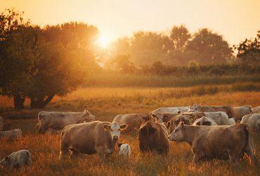AP – Agricultura e Pecuária